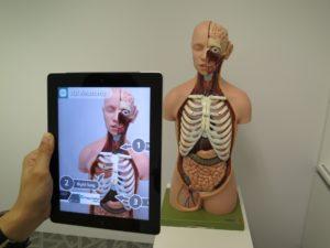 Innovasjonen Augmented reality i bruk - iPad foran anatomisk dukke viser kroppsdeler på skjermen
